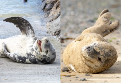 Seals of Seaweek
