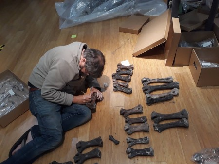 Dr Paul Scofield numbering moa bones