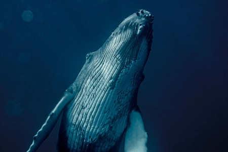 Anne Marie Basquin, The Changing Oceans: Deepwater Canyons, Our Oceans Exhibition 2020
