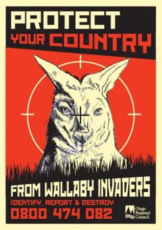 Seen any Wallabies?
