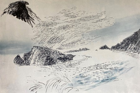 Image: Hawk over Foveaux Coast, Peter Belton, 2019