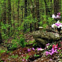 Forest grave with flowers