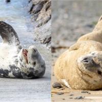 Seals of Seaweek