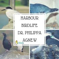 Harbour Birdlife - Dr. Philippa Agnew