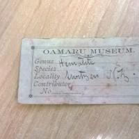 Original Oamaru Museum label for a hematite sample